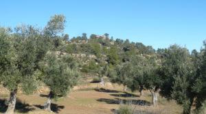 Vendemos Olivar en Calaceite con masía típica tradicional con lugar tranquilo por 60.000€