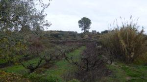 Foto de Finca en La Huerta de Caspe en venta con melocotoneros