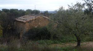 Detalle de Finca en La Huerta de Caspe con melocotoneros