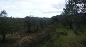 Finca en La Huerta de Caspe en oferta con olivos