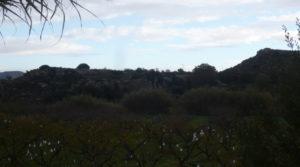 Foto de Finca en La Huerta de Caspe con cerezos
