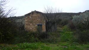 Finca en La Huerta de Caspe en venta con cerezos por 40.000€