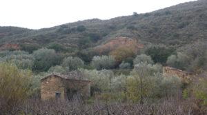 Finca en La Huerta de Caspe a buen precio con cerezos por 40.000€