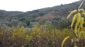 Finca en La Huerta de Caspe a buen precio con melocotoneros por 40.000€