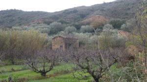 Finca en La Huerta de Caspe para vender con cerezos