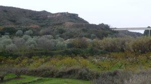 Vendemos Finca en La Huerta de Caspe con melocotoneros
