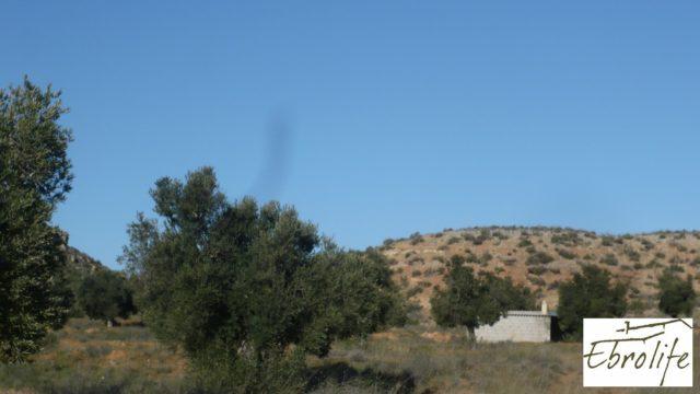 Finca de olivos en Caspe