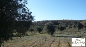 Finca de olivos en Caspe en oferta con olivos autóctonos por 14.000€
