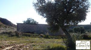 Se vende Finca de olivos en Caspe con olivos autóctonos por 14.000€