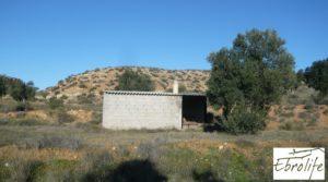 Se vende Finca de olivos en Caspe con olivos autóctonos