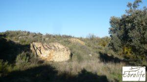 Detalle de Huerto en Caspe de olivos autóctonos con zona de pesca con olivos autóctonos por 7.000€