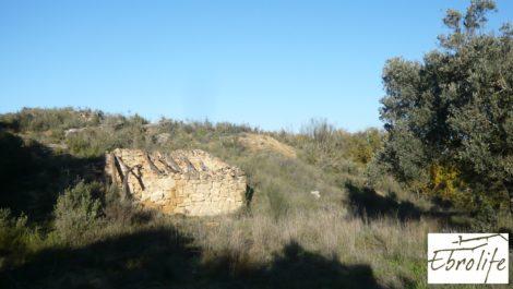 Huerto en Caspe de olivos autóctonos con zona de pesca