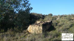 Huerto en Caspe de olivos autóctonos con zona de pesca en venta con olivos autóctonos por 7.000€