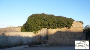 Se vende Huerto y Masía de dos plantas en Maella con electricidad
