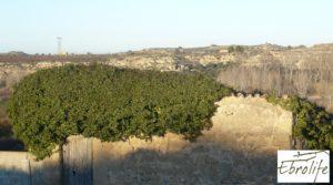 Foto de Huerto y Masía de dos plantas en Maella con desagüe por 18.000€
