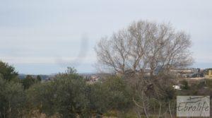 Se vende Huerta de olivos en Caspe. con olivos autóctonos por 9.000€