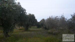 Huerta de olivos en Caspe. en venta con huerta por 9.000€