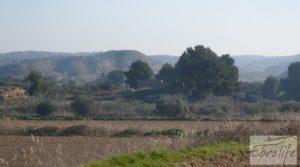 Vendemos Finca en la huerta de Caspe con masía de piedra. con olivos por 19.000€