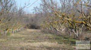 Foto de Finca en la huerta de Caspe con masía de piedra. en venta con acceso asfaltado por 19.000€