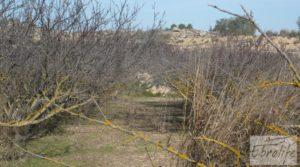 Detalle de Finca en la huerta de Caspe con masía de piedra. con olivos por 19.000€