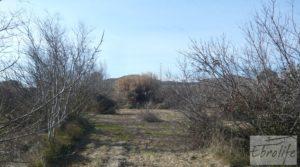 Finca en la huerta de Caspe con masía de piedra. a buen precio con olivos