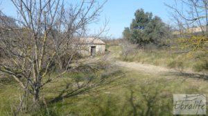Foto de Finca en la huerta de Caspe con masía de piedra. en venta con ciruelos