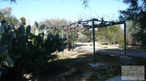 Casa de campo en Maella con finca de frutales y olivos a buen precio con olivos