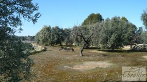 Foto de Casa de campo en Maella con finca de frutales y olivos con olivos
