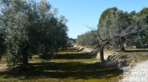 Detalle de Casa de campo en Maella con finca de frutales y olivos con olivos por 97.000€