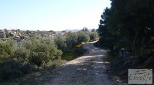 Casa de campo en Maella con finca de frutales y olivos a buen precio con arboles frutales por 97.000€