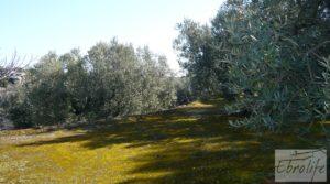 Se vende Casa de campo en Maella con finca de frutales y olivos con olivos por 97.000€