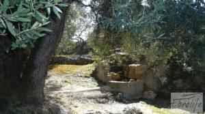 Casa de campo en Maella con finca de frutales y olivos en oferta con olivos por 97.000€