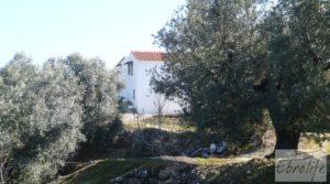 Vendemos Casa de campo en Maella con finca de frutales y olivos con arboles frutales por 97.000€