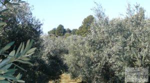 Casa de campo en Maella con finca de frutales y olivos en venta con olivos