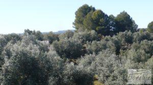 Foto de Casa de campo en Maella con finca de frutales y olivos con olivos por 97.000€