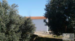 Foto de Casa de campo en Maella con finca de frutales y olivos con arboles frutales