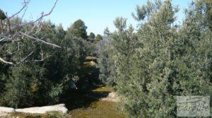 Se vende Casa de campo en Maella con finca de frutales y olivos con arboles frutales