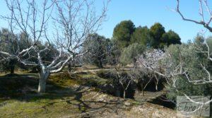 Casa de campo en Maella con finca de frutales y olivos en venta con arboles frutales