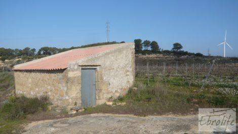 Finca de viñedos en espaldera en Batea