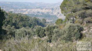 Foto de Finca de olivos con masía de piedra en Fabara en venta con variedad tradicional de gran calidad