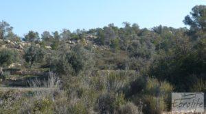 Finca de olivos con masía de piedra en Fabara para vender con variedad tradicional de gran calidad