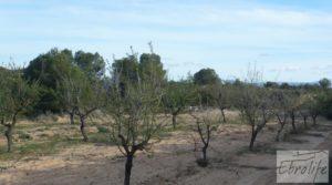 Se vende Finca de almendros en plena producción en Maella con regadío por 17.000€