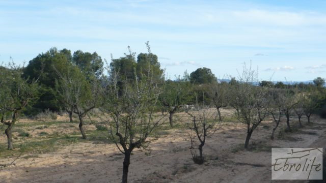 Finca de almendros en plena producción en Maella