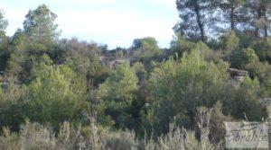 Finca de almendros en plena producción en Maella en oferta con regadío por 17.000€