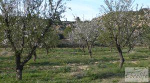 Se vende Finca de almendros en plena producción en Maella con regadío