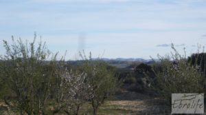 Foto de Finca de almendros en plena producción en Maella con regadío