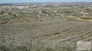 Foto de Finca en la huerta de Caspe con masía de piedra. con olivos
