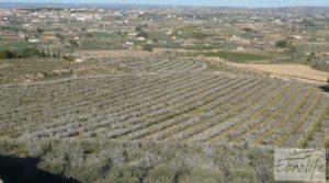 Finca en la huerta de Caspe con masía de piedra. en oferta con olivos por 19.000€