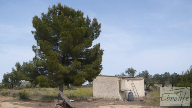 Olivar con masía rústica en Maella.