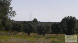 Foto de Olivar con masía rústica en Maella. en venta con olivar